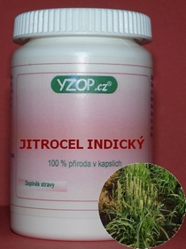 Bylinné kapsle Jitrocel indický - Psyllium 100ks